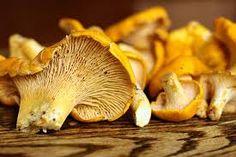 Pacific Northwest Golden Chanterelle
