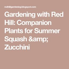 Gardening with Red Hill: Companion Plants for Summer Squash & Zucchini