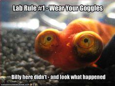 lab rule #1 - Google Search