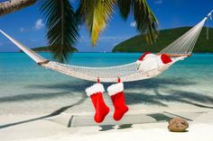 christmas palm tree images - Google Search