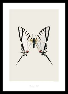I loooove Butterflies xx