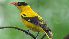 Afbeeldingsresultaat voor vogelsoorten