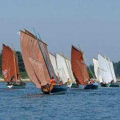 Autre vue des yoles en course,  Golfe du Morbihan (56) France