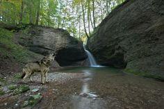 Vorderer Wasserfall mit Wolf