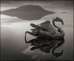 Há um lago na Tanzânia, na África, com um segredo mortal: ele transforma qualquer animal que o toca em pedra. O raro fenômeno é causado pela composição química do lago, e as criaturas petrificadas que ele cria parecem ter saído de um filme de terror. Isso acontece devido ao pH do lago, que fica entre 9 e 10,5 – uma alcalinidade extrema que preserva os bichos por toda a eternidade.