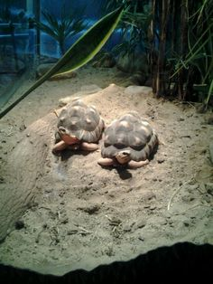 Love these turtles #Brookfield Zoo