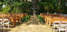 Dark brown  pergola arbor with with greenery and glass globes with tea lights pews and chairs with ferns down the aisle