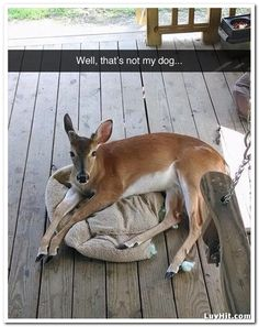 well thats not my dog