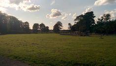 Pilton Park in the summer