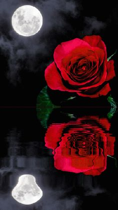 Rosas Gif, Image N, Romantic Images, Red Roses, Animation, Wallpaper, Awesome, Flowers, Anime