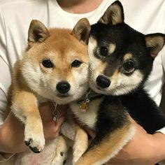 """torukou: """" Natsu & Fuyu """""""