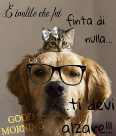 Buona domenica a tutti!!🐾🐾 Good Morning Kisses, Good Morning Good Night, Happy Weekend Images, Good Night Quotes, Dog Memes, Good Mood, Woodstock, Animals And Pets, Dog Cat