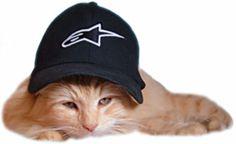 Le ronronnement d'un chat peut réduire notre stress!