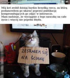 Po pierwsze, RODO obowiązuje. Po drugie, jestem pewna, że kot już nigdy nie popełni tego błędu. Na pewno.