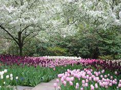 Westchester Gardens