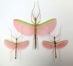 Papillons - insectes