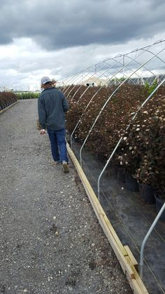 Infante tree and Shrubs auction