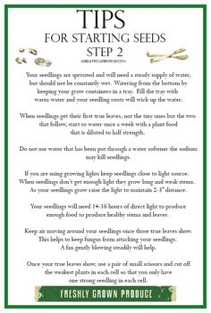 Tips for Starting Seeds Step 2 {Growing} - A Healthy Life For Me