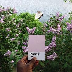 Pantone Project on Instagram