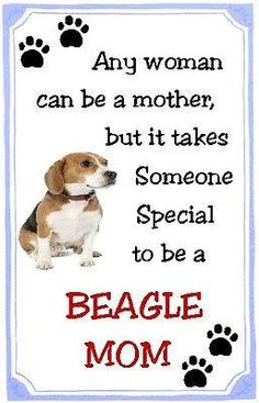My mom is definetily (not sure if I spelt that right) an expert beagle mom. (I'm a beagle mom in training!) Beagles are tough and people who don't have a beagle (or a hound in general) just DO not understand! Art Beagle, Beagle Puppy, I Love Dogs, Puppy Love, Cute Beagles, Group Of Dogs, Puppy Eyes, Dog Quotes, Animal Quotes