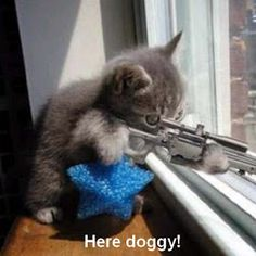 Cat with Gun