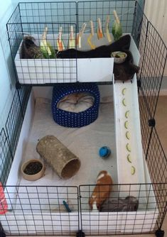 Gallery - C and C Guinea Pig Cages