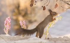 smell the winter flower by Geert Weggen on 500px