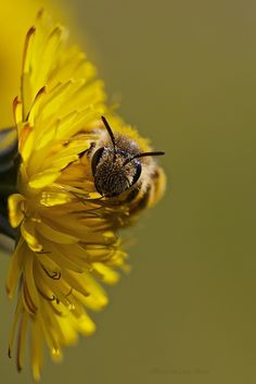 """Bee II"" by Ricardo Alves    Looks like he's in the middle of a binge."