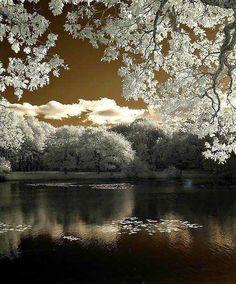 JUNOS MEMORIAL GARDEN - Fairyland