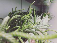 Plante grasse Quelques Photos, Cactus Plants, Boutique, Nature, Succulents, Flowers, Naturaleza, Cacti, Cactus