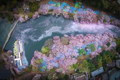 Fallen Cherry Blossom Petals Fill a Lake in Japan for Naturally Beautiful Scenes From Above - My Modern Met