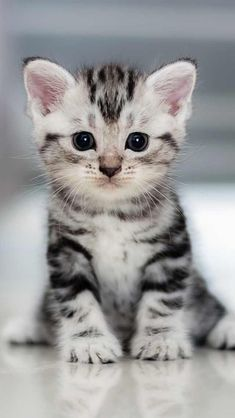 50 Best Catling images | cica, kiscica, cuki állatok