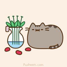 Pusheen the cat roses taste good