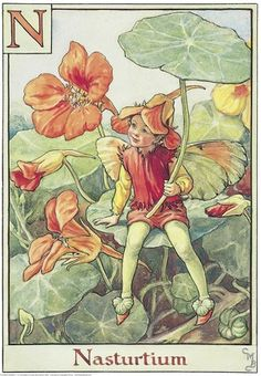 Illustration for the Nasturtium Fairy from Flower Fairies of the Alphabet.  A boy fairy sits on a nasturtium leaf holding another leaf in his right hand as an umbrella or parasol.  										   																										Author / Illustrator  								Cicely Mary Barker