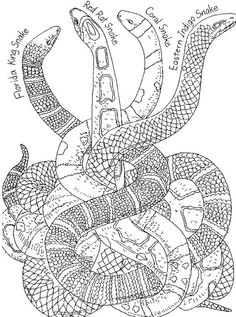 Realistic Animals Coloring Pages New Snake Coloring Pages Bestofcoloring Animal Coloring Pages, Realistic Animal Drawings, Harry Potter Colors, Color, Jr Art, Snake Coloring Pages