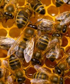 BEES: We all know that bees sting, but they also have a sweet side. Between all the buzzing, these insects help pollinate plenty of plants, keeping our environment rich and thriving. Science has recently discovered that the bugs make great detectors, too. Bees have been used to locate abandoned (but active) landmines and as indicators of when toxic chemicals have been released in an area. This impressive skill will allow officials to monitor pollutants and cases of chemical warfare.