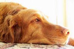 A mi perro le han mordido ¿qué hago?  #animales