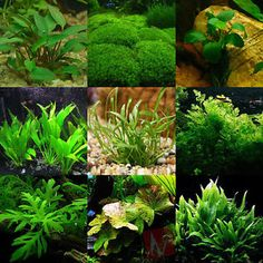 Best Freshwater Aquarium Plants For Beginners | eBay