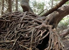 magical roots - Google Search
