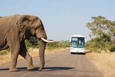 Here are 10 things you probably didn't know about Kruger National Park.