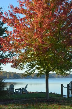 Autumn Blaze Maple | homeiswheretheboatis.net #fall #LakeNorman