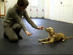 Puppy Foundation Agility-VERY good video