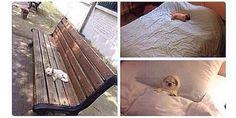 3. Los perros pequeños piensan que son dueños de toda tu cama.