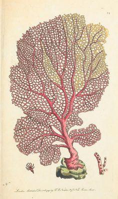 Coral Sea Fan...1789