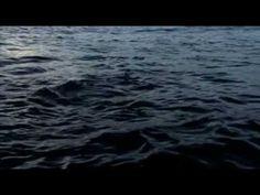 La nuit des requins.