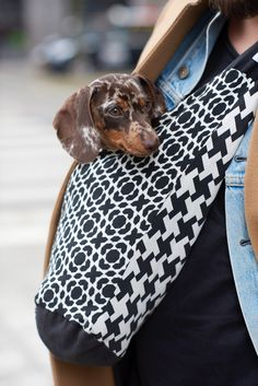 BYO - Bring Your Own doggy days to go! Pet Accessories, Sling Backpack, Bring It On, Product Launch, Backpacks, Pets, Bag, Fashion, Moda