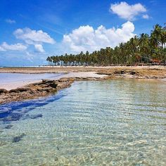 "* Tamandaré, Estado de Pernambuco. Brasil * ""Praia dos Carneiros"".  Litoral sul de Pernambuco."