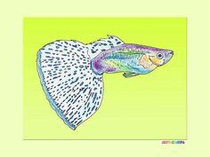 Bluegrass guppy tapet - tropické ryby, mořské ryby zbarvení