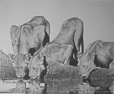 Lions Drinking by Rita Niblock on ARTwanted