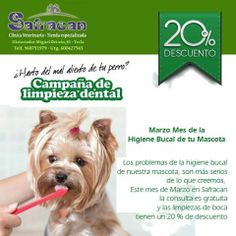 atención Yecla  Safracan,veterinarios , tiene una promoción del 20% en limpieza bucal de tu mascota ! ya que esta es un miembro más de tu familia cuidalá !!!